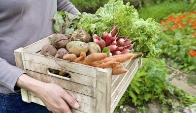 Welches Gemüse im Garten wachsen