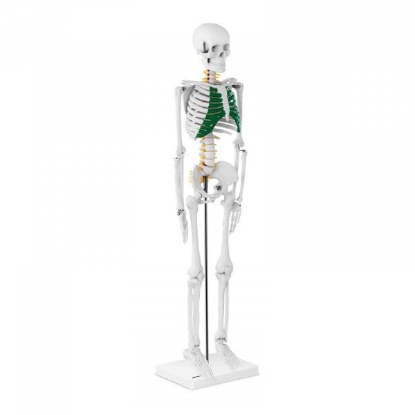 Miniature Skeleton PH-SK-5